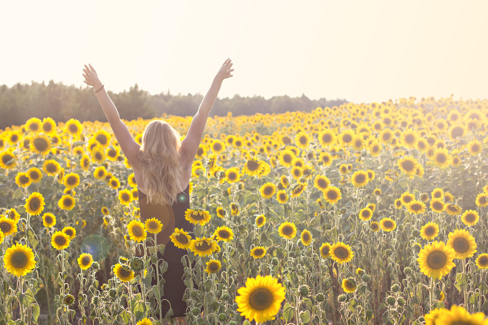 Flower Essences For Joy Caring For Carers
